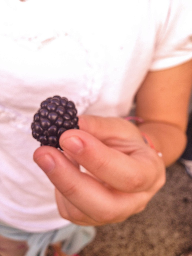 Wild Red fruit -The Petit Gourmet©