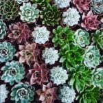 How to take really good care of your succulents?